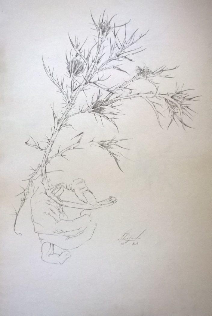Série Plantes et Fleurs (Grand Chardon)