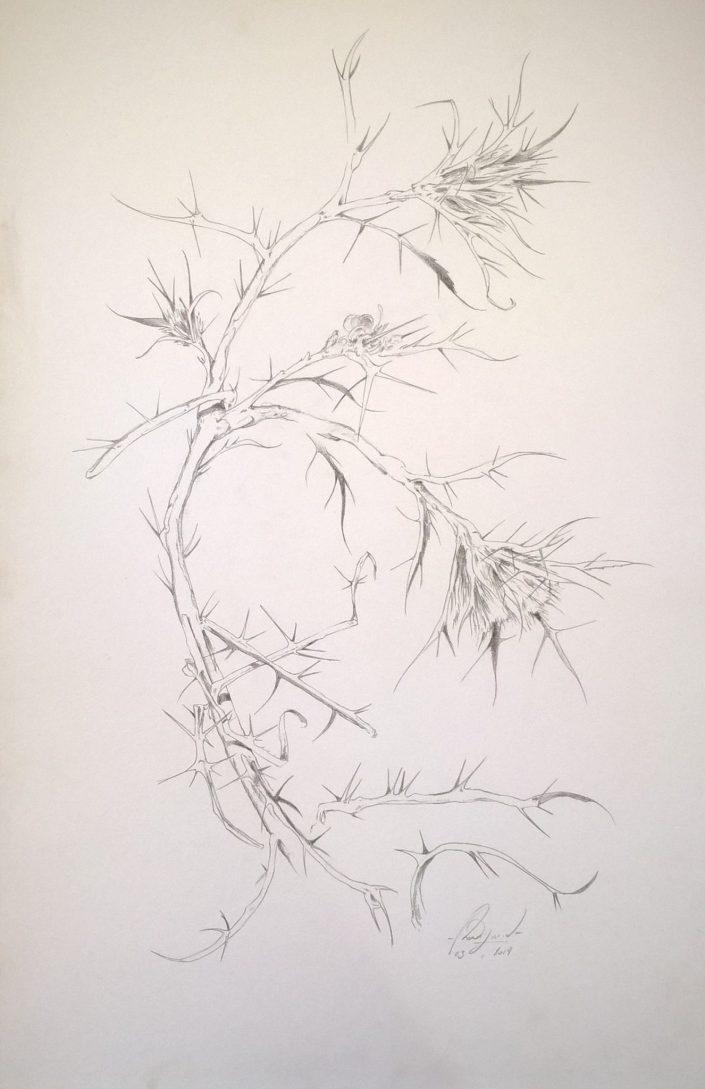Série Plantes et Fleurs